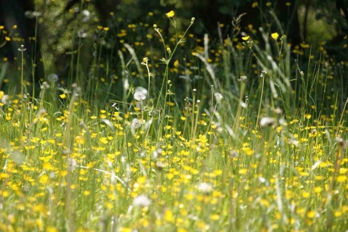 Imagen de Alergia al polen