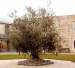 Residencia Los Olivos A Peroxa